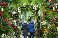 Royal Botanic Gardens Kew Orchid Festival